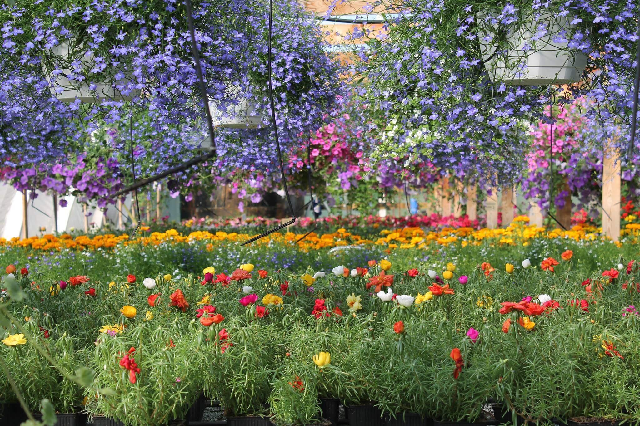 Kukkiva Kunnas puutarha Oulu